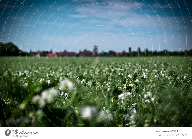 visual impairment Summer Environment Nature Landscape Plant Sky Clouds Beautiful weather Foliage plant Agricultural crop Field Blue Green White Colour photo