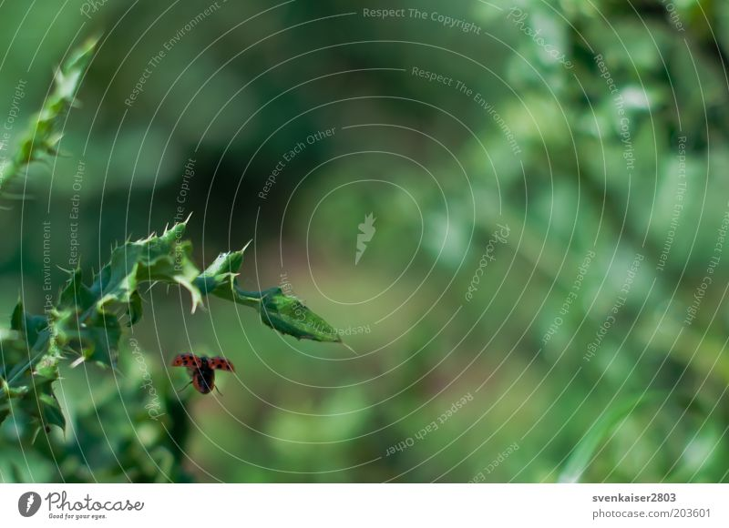 Nature Green Plant Red Summer Animal Environment Flying Goodbye Ladybird Thorn