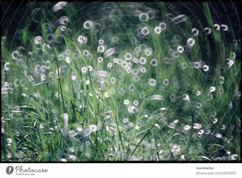 Grass made to measure Art Environment Nature Landscape Drops of water Beautiful weather Plant Meadow Glittering Moody Mysterious Sustainability Pure Surrealism