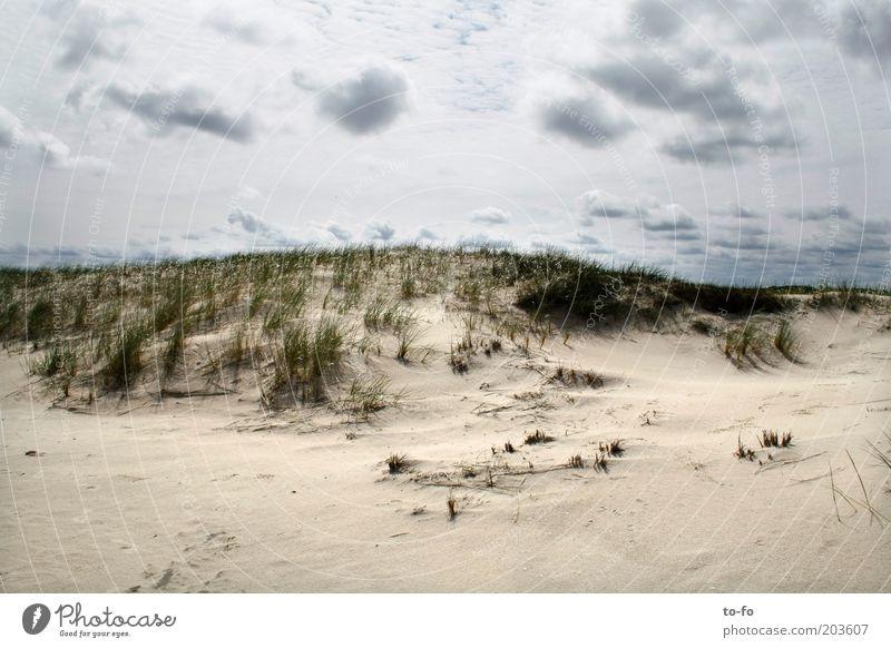 dune Nature Landscape Sand Air Sky Clouds Plant Grass Coast Beach North Sea Moody Calm Colour photo Exterior shot Deserted Day