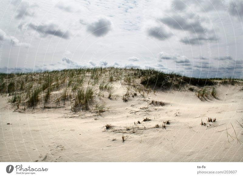 Sky Nature Plant Beach Clouds Calm Landscape Grass Sand Coast Air Moody North Sea Ocean