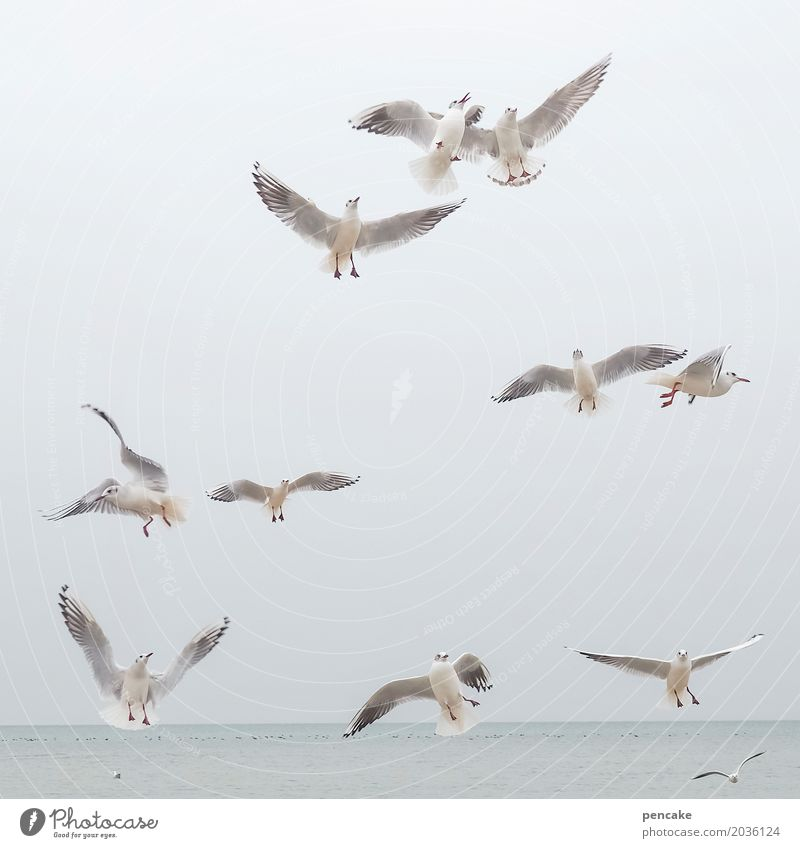 trip Nature Elements Water Sky Lake Animal Wild animal Bird Group of animals Flying Lake Constance Seagull Trip Colour photo Subdued colour Exterior shot