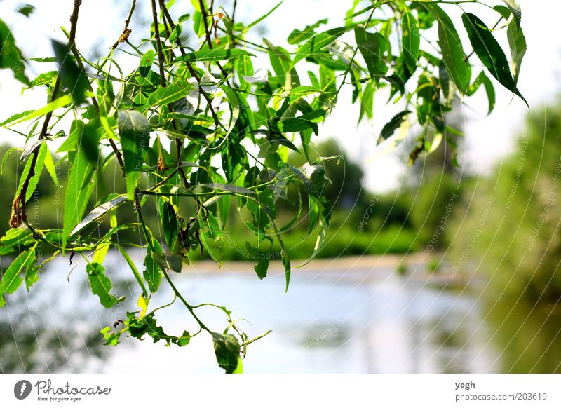 through the tree Environment Nature Plant Water Summer Beautiful weather Tree Leaf Park Lakeside Bright Green Contentment Calm Protection Comforting