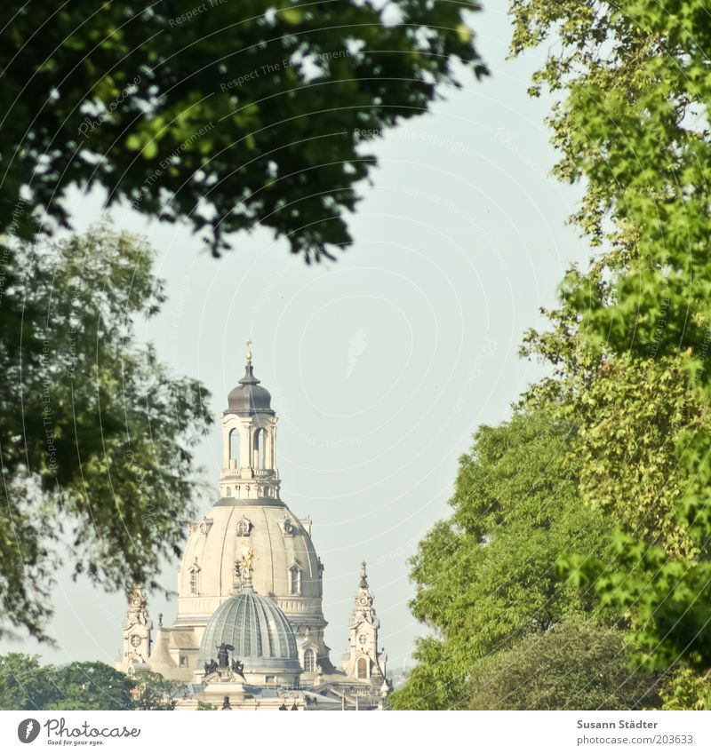 Tree Vacation & Travel Summer Church Illuminate Roof Dresden Vantage point Dome Sightseeing Tourist Attraction Old town Domed roof Deciduous tree Sandstone Protection
