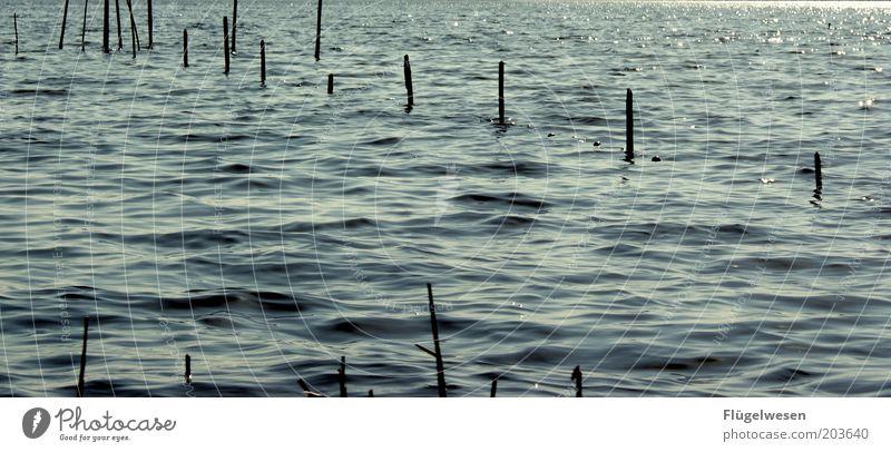 Ocean Lake Waves Coast River Net Protection Catch Lakeside Baltic Sea North Sea Fishery Landing net Fish trap