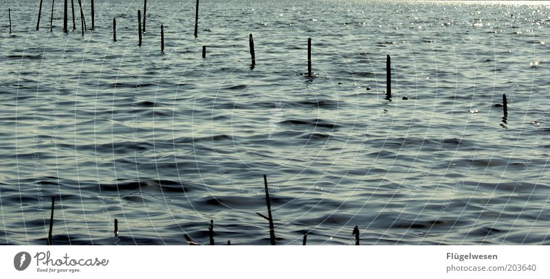 Set sail Waves Coast Lakeside North Sea Baltic Sea Ocean River Catch Protection Fish trap Net Fishery Landing net Colour photo Day Deserted