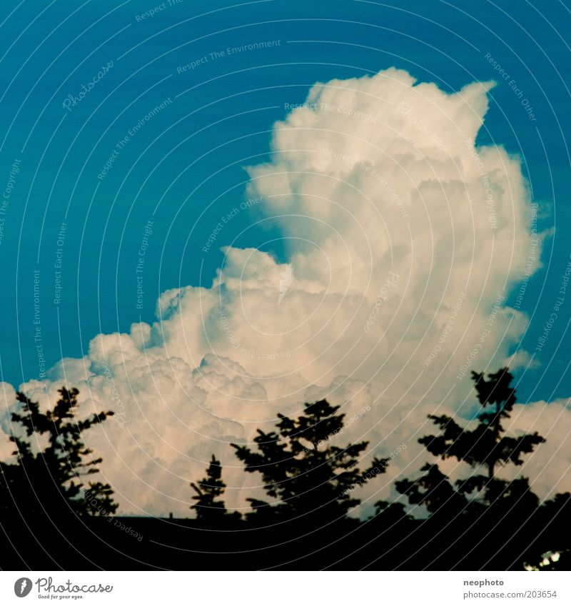 Sky White Blue Black Clouds Weather Cumulus Coniferous trees Tree Mount up
