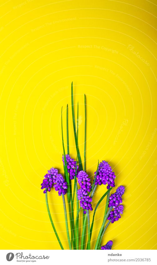 Spring flowers on a yellow surface Beautiful Summer Decoration Mother's Day Nature Plant Flower Leaf Blossom Bouquet Fresh Bright Yellow Green Violet blooming