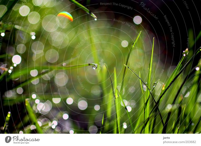 ecosystem Environment Nature Plant Drops of water Sunlight Spring Summer Grass Fresh Natural Green Calm Blade of grass Wet Dew Foliage plant Colour photo