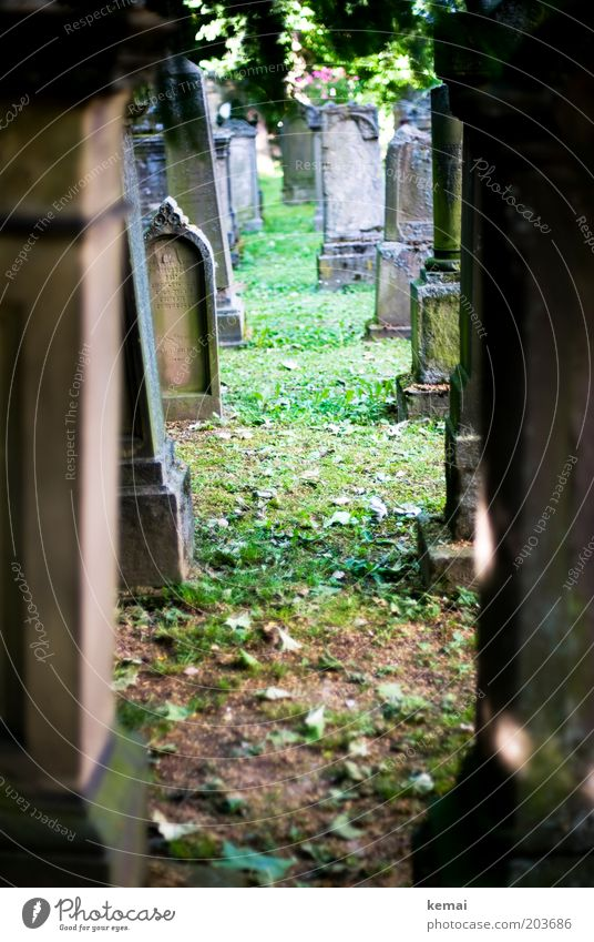 gravestone escape Environment Nature Summer Beautiful weather Warmth Grass Moss Cemetery Tomb Tombstone Pedestal Old Sharp-edged Brown Calm Religion and faith