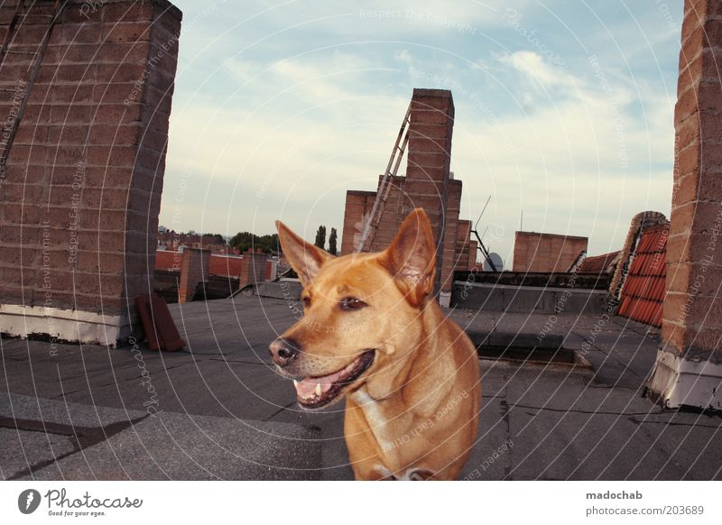 Beautiful Animal Life Freedom Dog Elegant Safety Roof Protection Trust Serene Joie de vivre (Vitality) Chimney Pet Loyalty Sympathy
