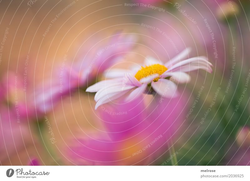 Nature Plant Summer Green White Flower Relaxation Leaf Dye Blossom Meadow Style Grass Pink Park Growth
