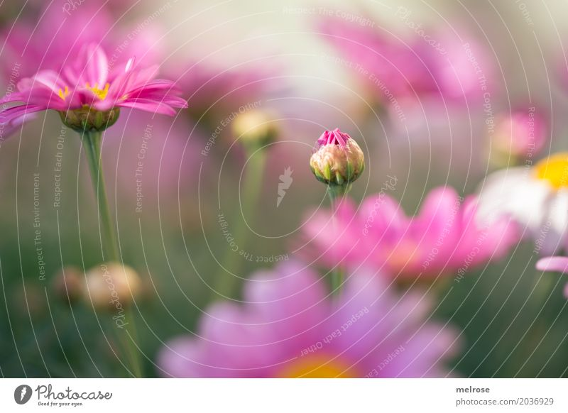 Nature Plant Green Flower Dye Blossom Spring Meadow Style Grass Pink Illuminate Elegant Bushes Happiness Blossoming