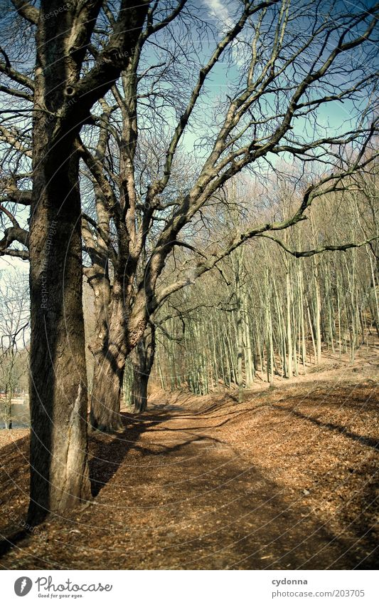 Just before Relaxation Calm Environment Nature Landscape Autumn Tree Park Forest Transience Change Lanes & trails Time Cold Air Colour photo Exterior shot