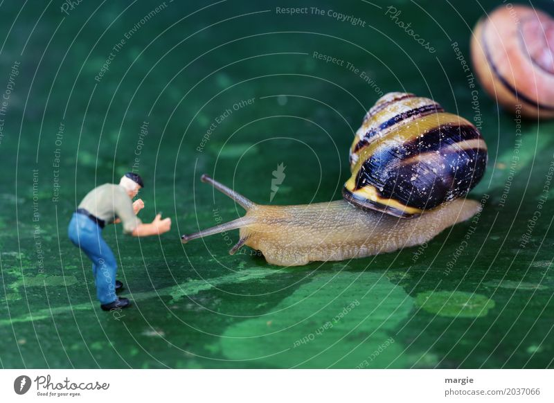 Thanks to Photocase this: Miniature figure with snails Human being Masculine Man Adults 1 Animal Wild animal Snail Animal face 2 Green Landscape format Spiral