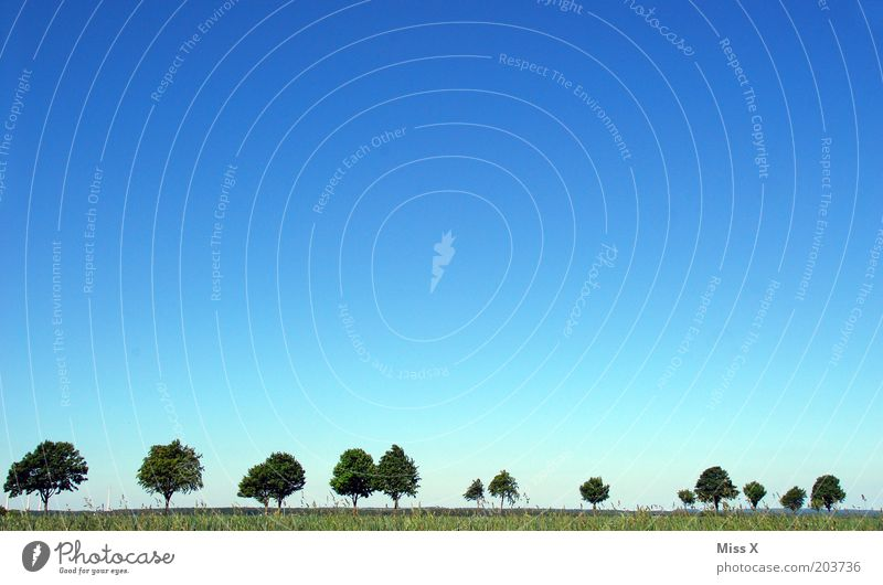 Nature Sky Tree Summer Far-off places Street Meadow Grass Pure Beautiful weather Avenue Blue sky Cloudless sky Row of trees