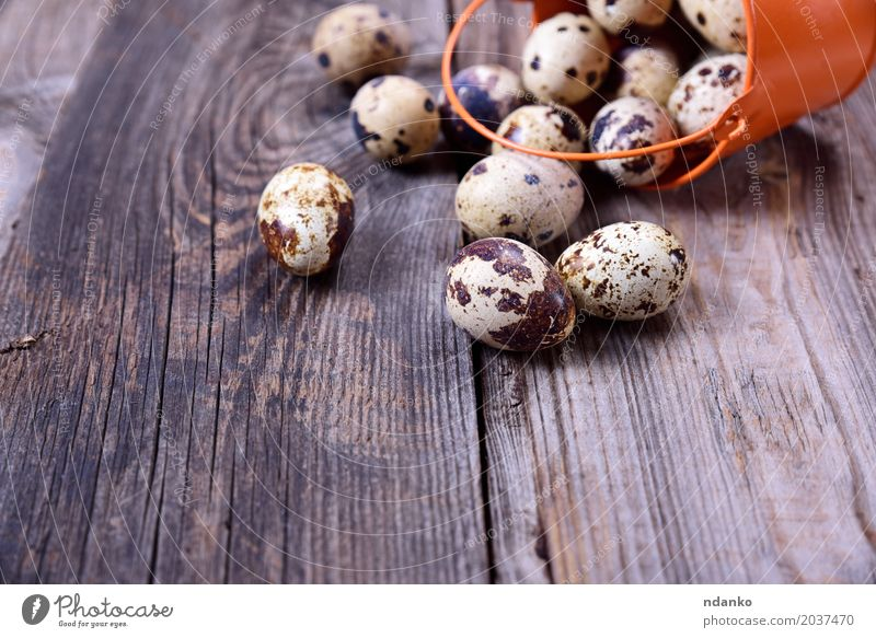Scattered from a bucket quail eggs Nutrition Breakfast Diet Table Easter Wood Fresh Small Above Gray Egg Shell food Edible Raw Useful Tasty Fragile Ingredients