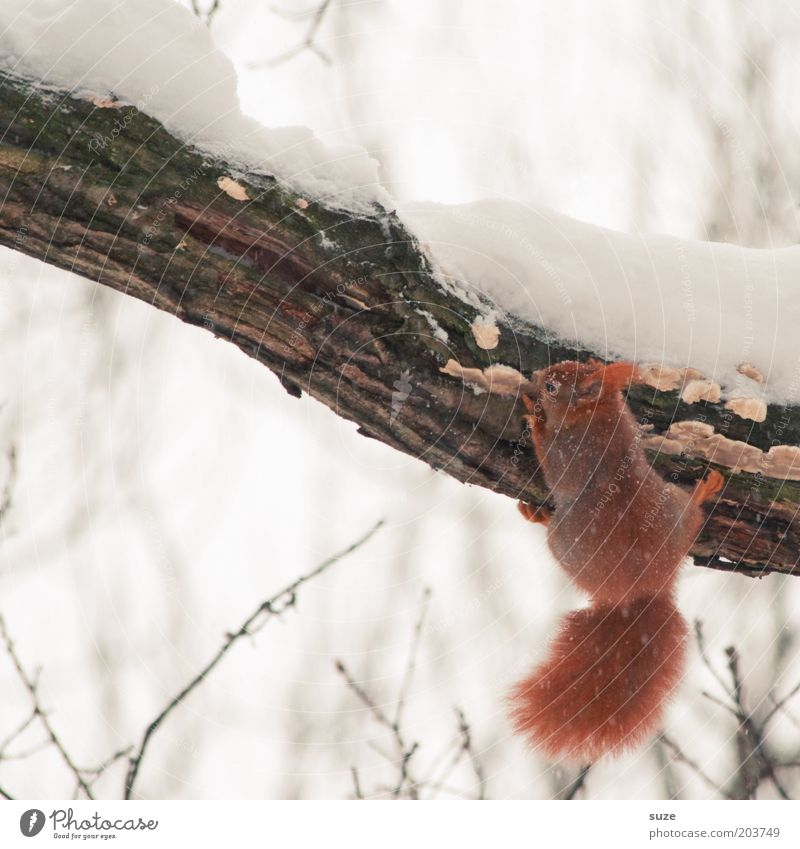 Nature White Tree Red Animal Winter Environment Cold Snow Small Ice Natural Wild animal Cute Frost Branch