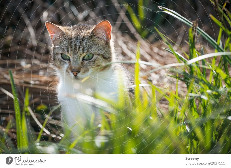 What the hell's going on? Nature Plant Animal Spring Summer Grass Bushes Garden Park Meadow Pet Cat 1 Observe Sit Curiosity Serene Watchfulness Colour photo