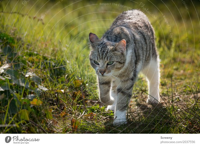 on rambles... Nature Plant Animal Spring Summer Beautiful weather Garden Park Meadow Pet Cat 1 Observe Walking Serene Curiosity Colour photo Exterior shot