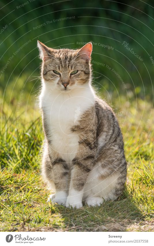 Now look at this... Nature Plant Animal Sun Spring Summer Beautiful weather Grass Bushes Garden Park Meadow Pet Cat 1 Observe Sit Serene Patient Calm