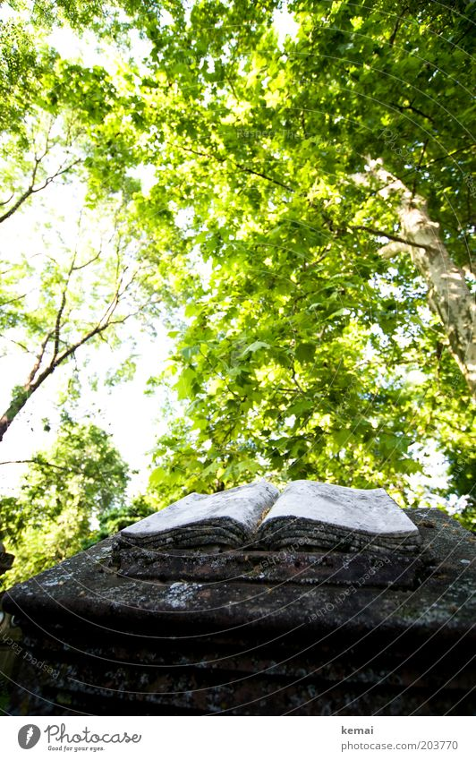 Book of Books Art Work of art Sculpture Environment Nature Plant Sunlight Spring Summer Climate Warmth Tree Foliage plant Wild plant Garden Park Cemetery Page