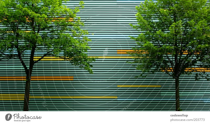Nature Tree City Summer Line 2 Architecture Facade Society Linearity