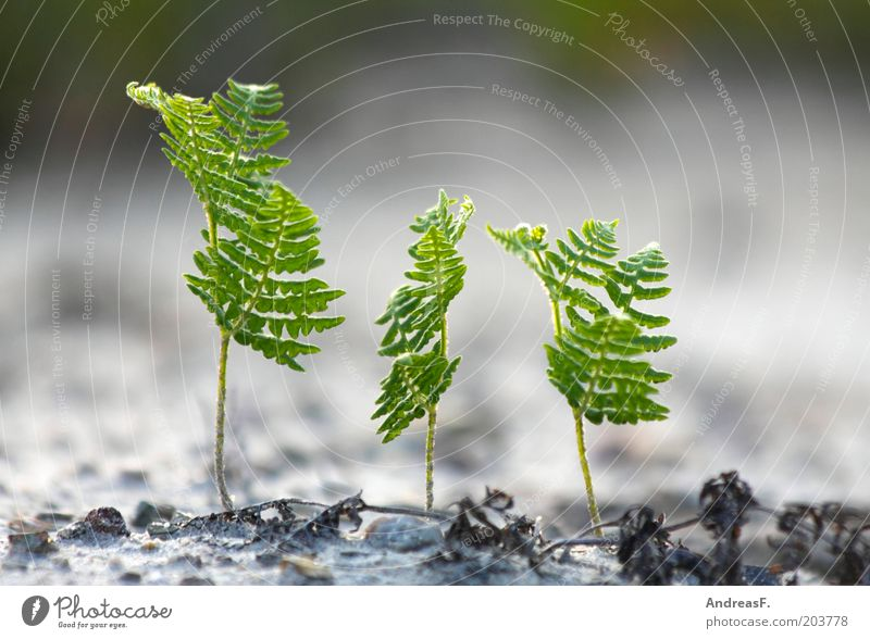 Nature Green Plant Environment Garden Sand Fresh 3 Growth New Environmental protection Human being Fern Shoot Pteridopsida Foliage plant