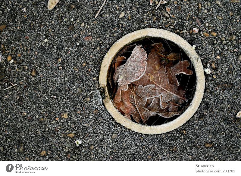 Winter Leaf Autumn Concrete Circle Esthetic Frost Ground Authentic Golf Pipe Hollow Golf course Hole Winter break