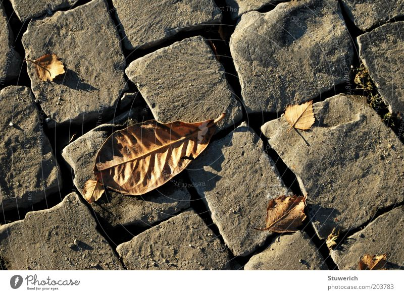 Leaf Autumn Stone Esthetic Sidewalk Cobblestones Autumnal