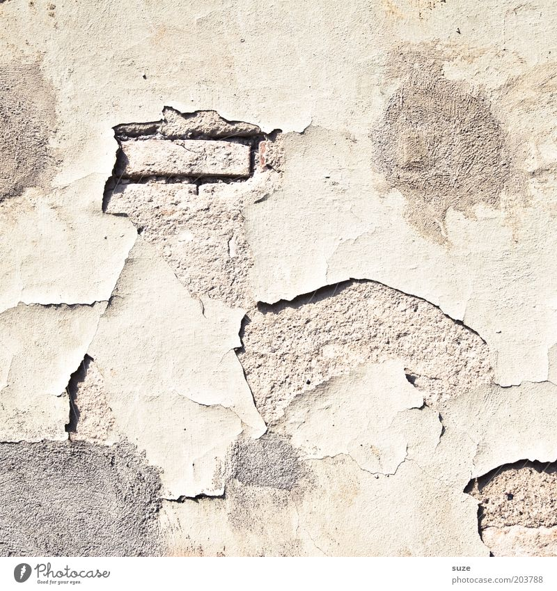 Einstein Redecorate Wall (barrier) Wall (building) Facade Old Authentic Dirty Stagnating Decline Past Transience Dismantling Derelict Colour photo