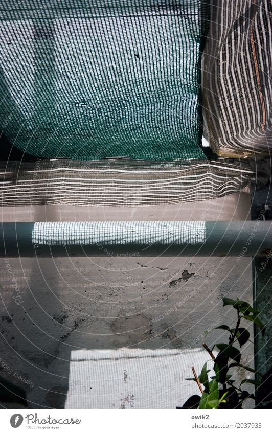 greenhouse Workplace Gardener Greenhouse Plant Heating pipe Conduit scaffold net safety net site network Rough Transparent Shaft of light Stone Plastic Growth