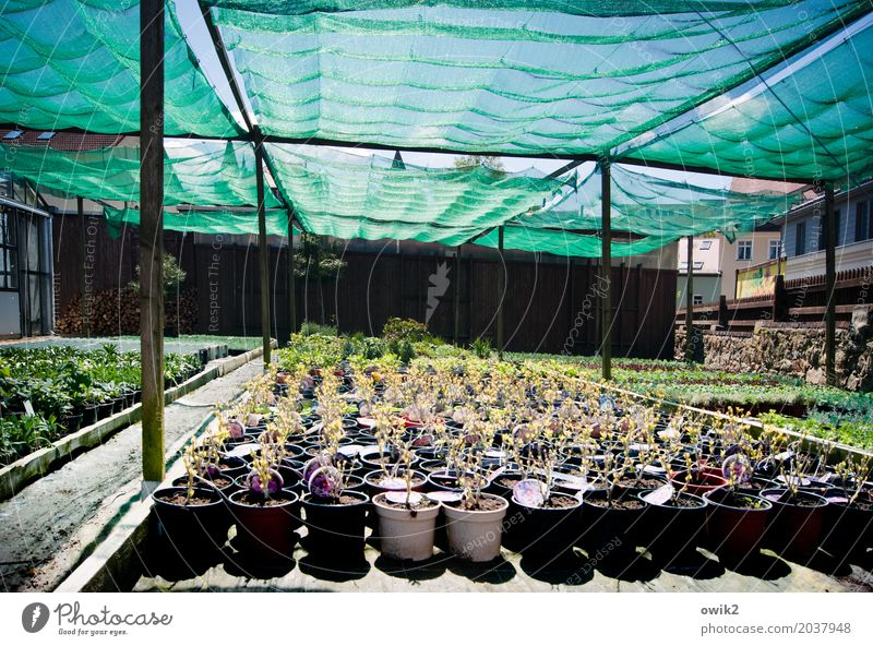 ordered and not collected Work and employment Gardening Workplace Market garden Beautiful weather Plant Leaf Blossom Pot plant Blossoming Stand Wait Together
