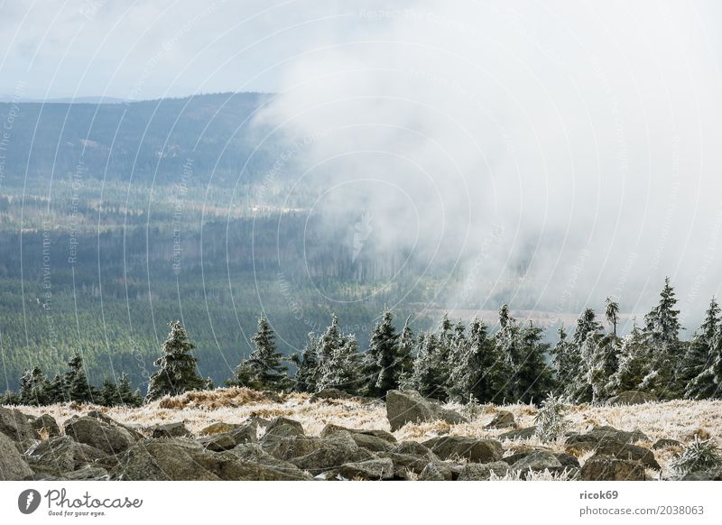 Landscape with snow on the Brocken in the Harz Mountains Vacation & Travel Tourism Nature Clouds Tree Forest Green Environment Snow voyage destination