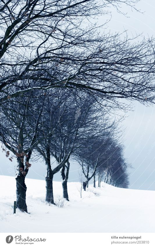 from the old days. Winter Snow Environment Nature Landscape Horizon Bad weather Ice Frost Tree Freeze Cold Blue White Calm Row of trees Branch Snowdrift