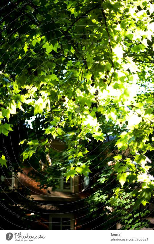 Nature Tree Green Plant Summer Leaf House (Residential Structure) Window Warmth Bright Environment Facade Growth Climate Blossoming Illuminate