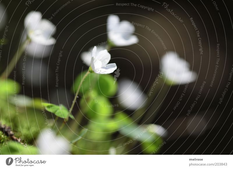 White Green Summer Emotions Contentment Moody Natural Blossoming Blossom leave