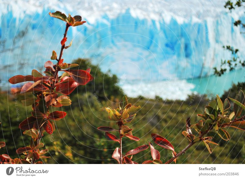 Nature Water White Blue Plant Cold Snow Landscape Environment Free Bushes Natural Beautiful weather Glacier Argentina