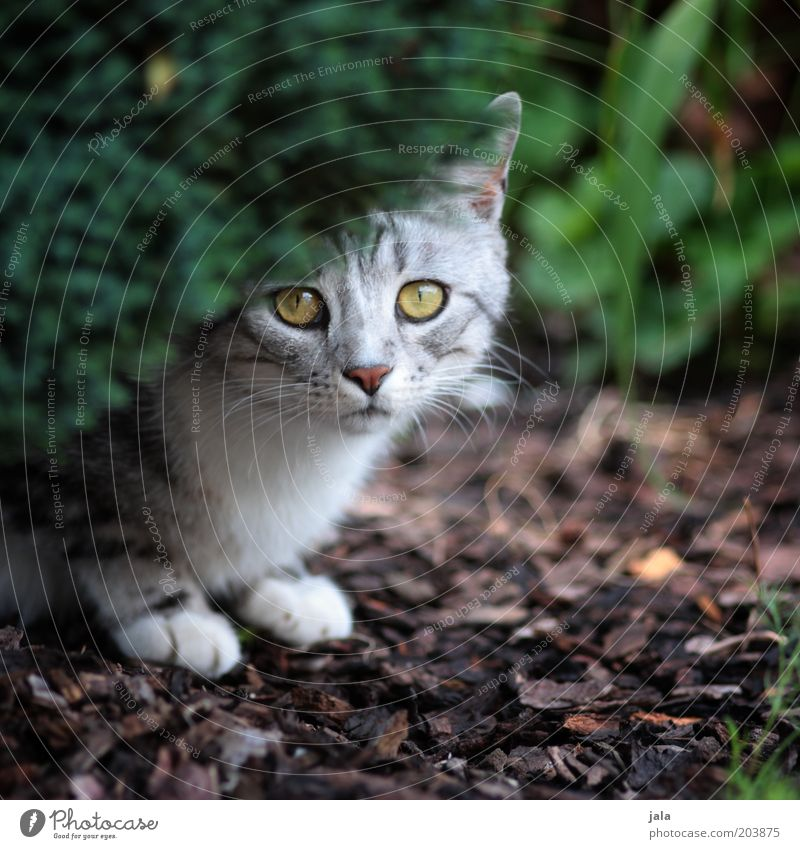 Plant Eyes Animal Garden Gray Cat Fear Ground Animal face Protection Timidity Hedge Crouch Insecure