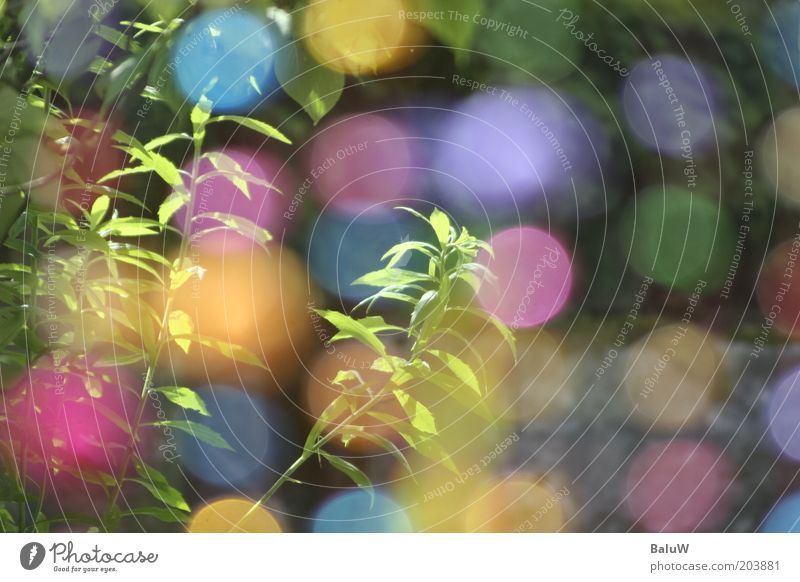 Blue Summer Yellow Garden Pink Design Lifestyle Ball Joie de vivre (Vitality) Visual spectacle Multicoloured Play of colours