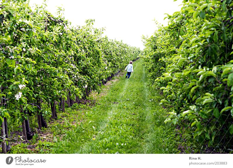 Green Boy (child) Movement Spring Garden Walking Happiness Infancy Agriculture Plantation Child Fuit growing Apple plantation