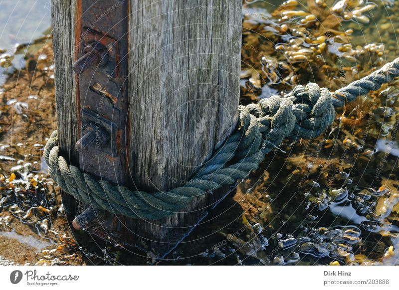 The saving stake Ocean Nature Coast Bay Fjord North Sea Baltic Sea Port City Deserted Harbour Navigation Boating trip Rope Wood Metal Water Firm Brown