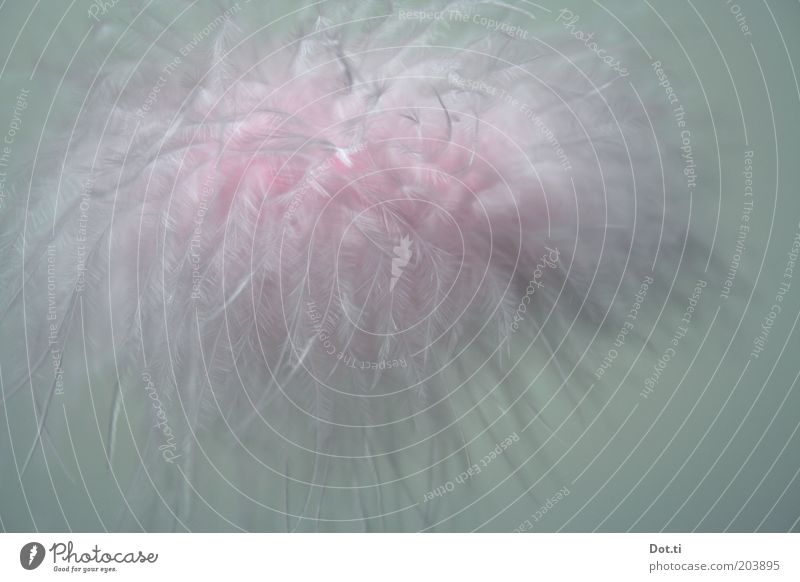 Pink Soft Feather Kitsch Delicate Easy Hover Ease Cuddly Heavenly Abstract Airy Cirrus Odds and ends Tuft