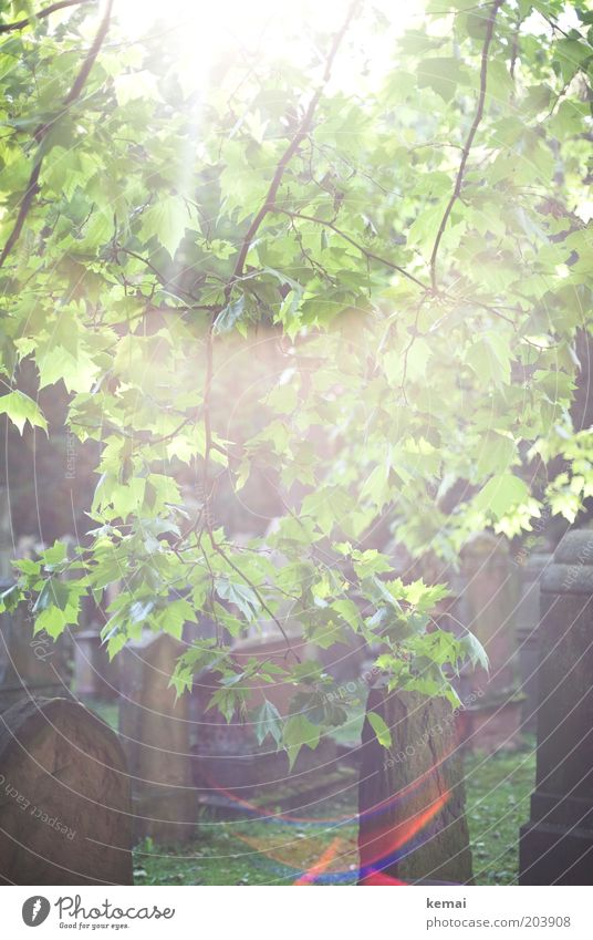 Nature Tree Sun Green Plant Summer Leaf Garden Dream Park Warmth Bright Environment Growth Climate Branch