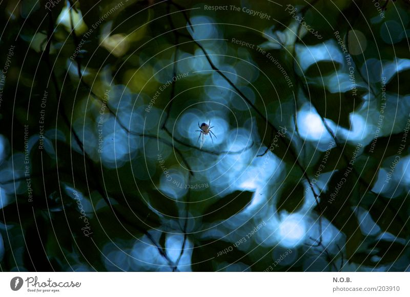 Green Blue Plant Animal Emotions Dream Moody Fear Threat Respect Spider Eerie Horror Center point Day Abstract