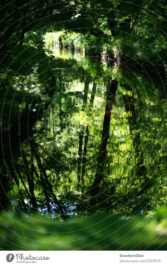 Nature Tree Green Plant Leaf Loneliness Forest Cold Brook Mirror image Peaceful Water reflection