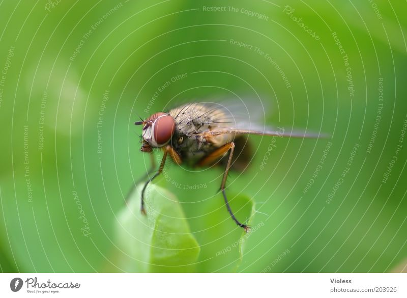 Green Animal Fly Animal face Wing Observe Concepts &  Topics Macro (Extreme close-up) Compound eye