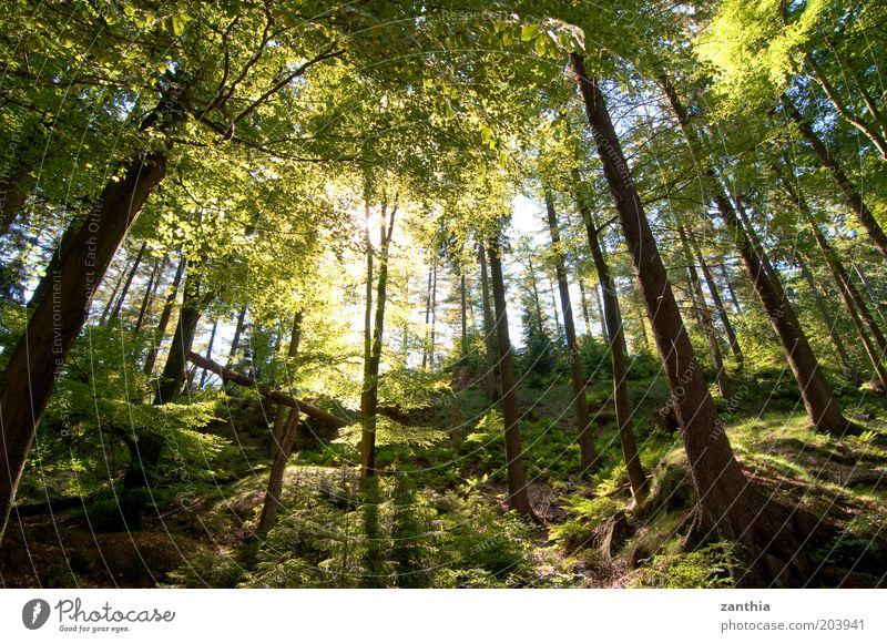 Silberbach Valley Nature Landscape Plant Sun Sunlight Summer Beautiful weather Tree Forest Fresh Bright Natural Brown Green Freedom Hope Life Moody Environment