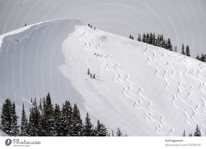 powder skiing Winter Snow Mountain Sports Skiing Snowboard Nature Landscape Alps Fresh Blue White Action Alpine backcountry cold Deep freeride Frozen lines