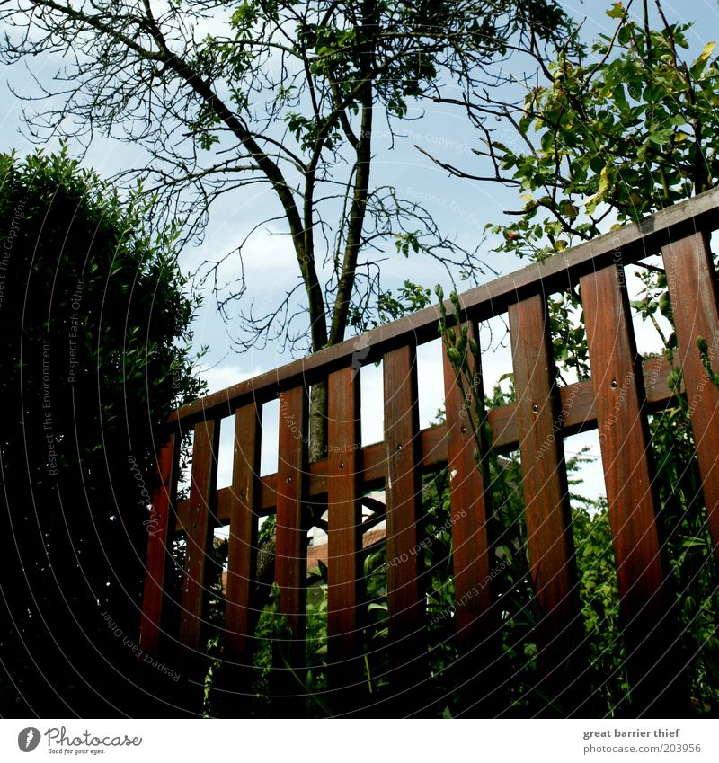 Nature Tree Summer Wood Brown Bushes Fence Barrier Garden fence Fenced in Wooden fence Boundary line Neighbor's garden